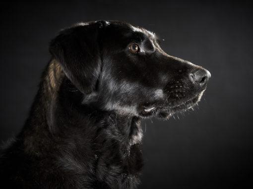 Hundeshooting